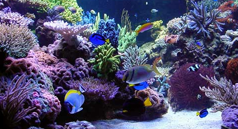 meerwasser f r aquarium zuhause image idee. Black Bedroom Furniture Sets. Home Design Ideas